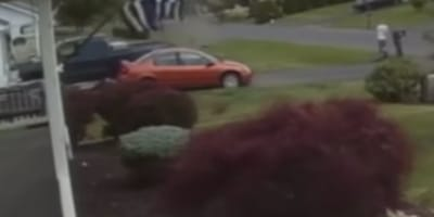 CCTV footage of a dog in the wind