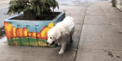 L'ultima straziante passeggiata del suo cane (Video)