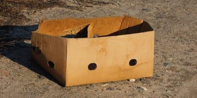 Encuentra una caja en un parque de Jaén: no se cree lo que hay en su interior