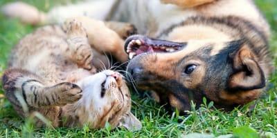 cane-e-gatto-giocano-sullerba
