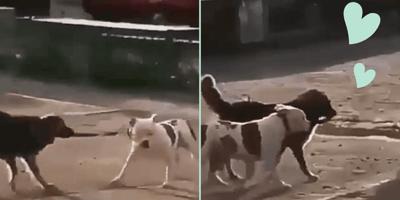 dos perros se escapan