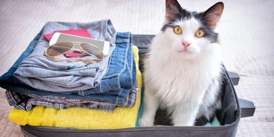 Portare il gatto in vacanza o lasciarlo a casa: cosa fare?