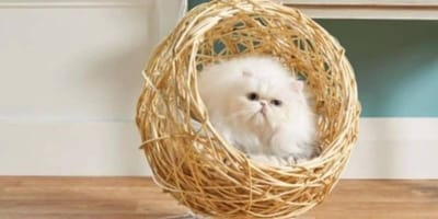 Aldi to start selling hanging chair that is eggcellent for cats