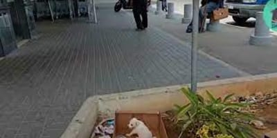 Porzucony biały szczeniak w Grecji