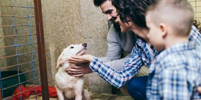 Cómo y dónde adoptar un perro en Bogotá