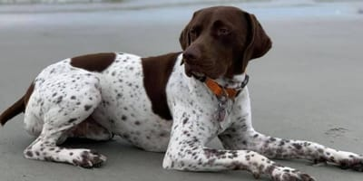 News reporter spots vital clue during reporting and saves stolen dog