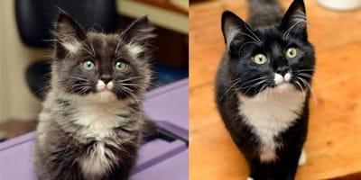 25 fotos del antes y después de gatos creciendo