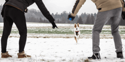 Der Rückruf beim Hund: Der Weg zum entspannten Freilauf