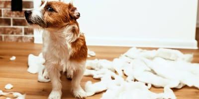 Ansiedad por separación en perros: causas y soluciones
