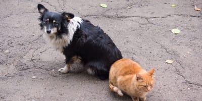 cane-e-gatto-abbandonati in-strada