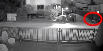 CCTV footage of man dumping cat