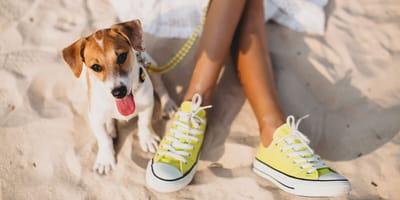 Pies nad morzem: o czym pamiętać planując wakacje z psem nad Bałtykiem