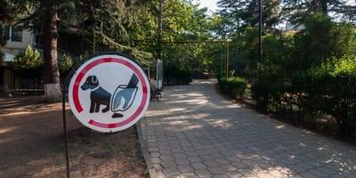 Obowiązek sprzątania po psie - wszystko, co musisz u nim wiedzieć