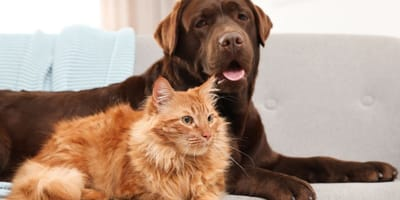 cane-e-gatto-sul-divano