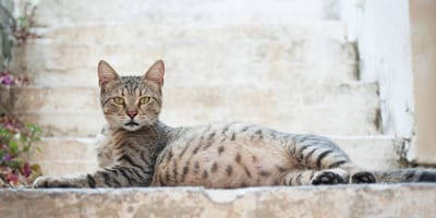 How long are cats pregnant for? Feline facts and figures