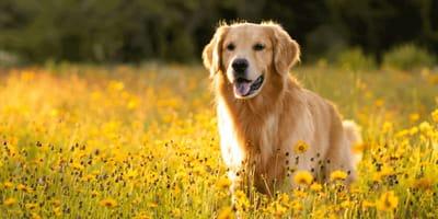 Le cose da sapere a giugno se hai un cane