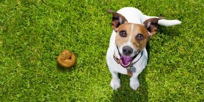 Cane in casa e igiene: una questione di educazione