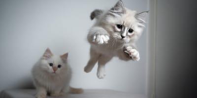 Síndrome del gato volador: origen, causas, peligros y tratamiento