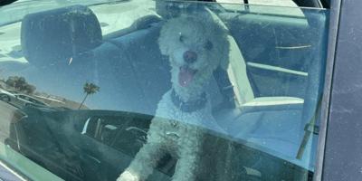 perro encerrado en coche