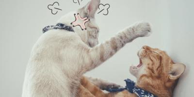 Gato agresivo con otros gatos: cómo solucionar este problema