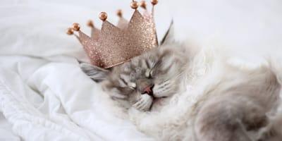 7 dowodów na to, że to kot ma Ciebie, a nie Ty kota!