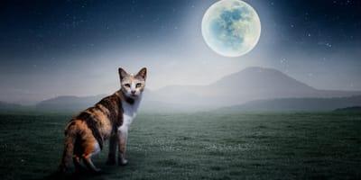Un gato bajo la luna llena