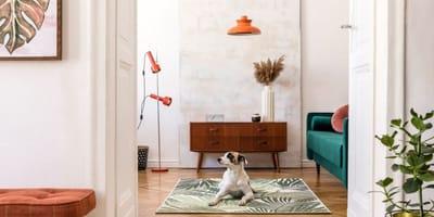 cane-bianco-in-salotto