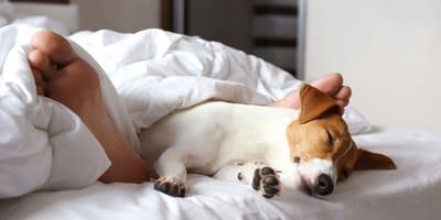 Czy spanie z psem to dobra decyzja?