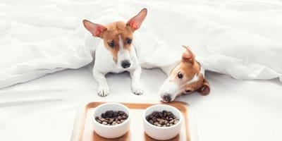 cani in albergo fanno colazione