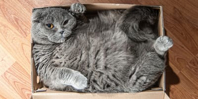 Why do cats love cardboard boxes so much?