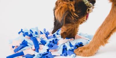 Zabawy węchowe, których musi spróbować każdy pies!