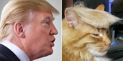 10 gatos que se parecen famosos: ¡vaya par de gemelos!