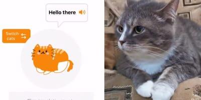 App que traduce los maullidos de tu gato: experto de la UNAM explica cómo funciona