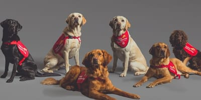 New study proves sniffer dogs can detect COVID-19 better than any PCR test
