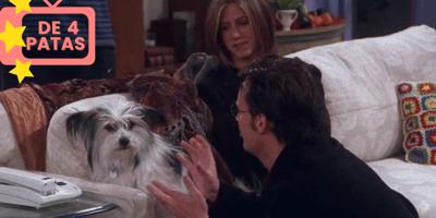 chandler perro friends episodio 8 temporada 7