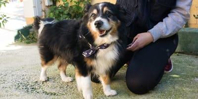 adopcion perro mestizo pomerania spap malaga