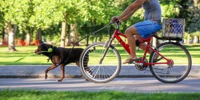 Na rower z psem - jak się przygotować do rowerowych wycieczek z czworonogiem?