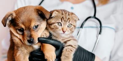 Problemas cardíacos en perros y gatos: síntomas, causas y tratamiento