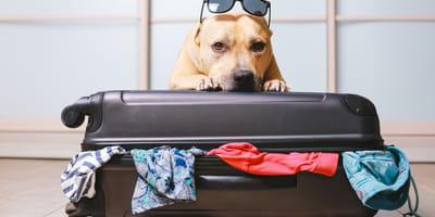 cane dietro valigia