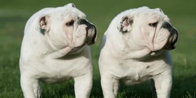Für 45.000 Euro kannst du jetzt deinen Hund klonen
