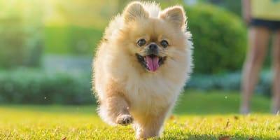Fünf goldene Regeln, wie Hunde gesund und glücklich werden