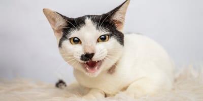 Dlaczego kot jest agresywny i jak sobie z nim radzić?