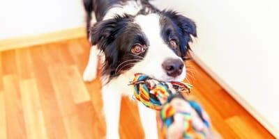 10 juegos para perros ideales para jugar en casa (sin romper nada)