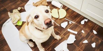 5 modi per correggere il comportamento del cane