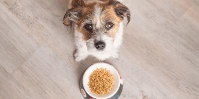 ¿Los perros pueden comer cacahuates o es peligroso?