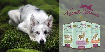 La community di Wamiz approva i menù per cani GRAIN-FREE di Terra Canis!