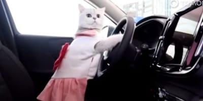 Ecco quanto guadagna Mao Mao, il gatto modello per le auto (Video)