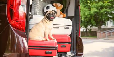 Le giuste misure di sicurezza per viaggiare con il cane