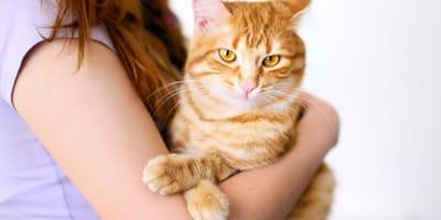 Sai come prendere in braccio un gatto?