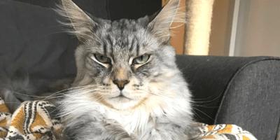 7 Anzeichen dafür, dass Ihre Katze Ihr Leben dominiert